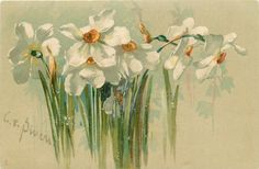 Full Sized Image: narcissi, white with yellow centres Flower Images, Flower Pictures, Flower Art, Catherine Klein, China Painting, Botanical Art, Vintage Beauty, Deco, Vintage Flowers