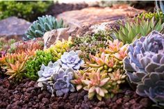 Succulent Tapestry nestled amongst rock and boulder from Featured is burgundy lava and Baja Cresta boulders. By designer Laura Eubanks at Design for Serenity. Succulent Display, Succulent Arrangements, Succulents Garden, Landscape Design, Garden Design, Natural Landscaping, Design Consultant, Serenity, Grass