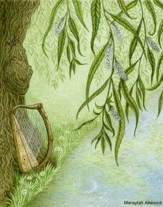 Willow, Wisdom of Trees Oracle Cards « Meraylah Allwood