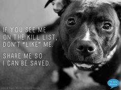 See me for what I am - a loving dog not a monster made by man