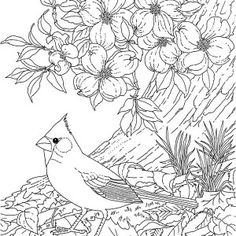adult and teen coloring pages