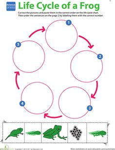Worksheets: Life Science Learning: Life Cycle of a Frog