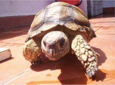Tortugas - Veterinaria especializada en Tortugas y otros animales exoticos - Venta de Alimento Balanceado