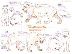 動物の描き方メモがとっても勉強になると話題! | エウレカ!eureka! - もふもふ犬猫動画