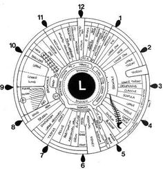 Iridology -  alternative medicine technique whose proponents claim that patterns, colours, and other characteristics of the iris can be examined to determine information about a patient's systemic health.