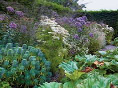 Joe Pye weed, milk parsley, persicaria, euphorbia (characias wulfenii?) -The Education of a Gardener - The New York Times