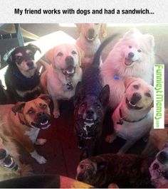 Funny Memes - [My Fried Works With Dogs And Had A Sandwich...] Check more at http://www.funniestmemes.com/funny-memes-my-fried-works-with-dogs-and-had-a-sandwich/