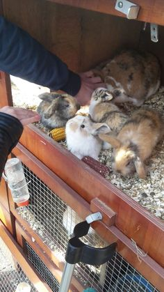 Cute Baby Bunnies, Funny Bunnies, Cute Babies, Nature Animals, Animals And Pets, Funny Animals, Cute Bunny Pictures, Animal Pictures, Bunny Cages