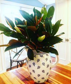 Magnolias freshly cut in a jug from Villeroy & Boch Magnolias, Fresh Flowers, Vase, Garden, Kitchen, Plants, Instagram, Home Decor, Magnolia Trees