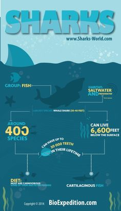 sharks-general-infographic