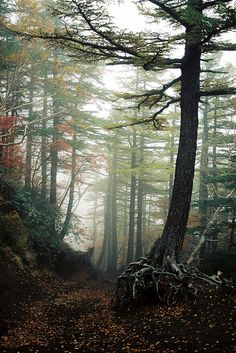 Aokigahara, the forest at the bottom of Mt. Fuji, the top suicide area in Japan. Over seventy-eight bodies have been discovered, supposedly confining the spirits of these individuals to forever haunt the area (by Lucky Philby).