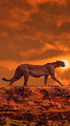 Download Cheetah Wallpaper by Anonymous11DM - 7e - Free on ZEDGE™ now. Browse millions of popular cheetah Wallpapers and Ringtones on Zedge and personalize your phone to suit you. Browse our content now and free your phone Cheetah Wallpaper, Wild Animal Wallpaper, Robot Animal, Animal Action, Cheetah Pictures, Animal Pictures, Animal Sketches Easy, Cheetah Drawing, Amazing Beasts