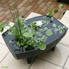 Compact water features, small-space landscaping, garden inspiration, and of course all things relating to container water gardening, patio ponds and much more. Small Water Gardens, Container Water Gardens, Indoor Water Garden, Glass Garden, Container Gardening, Patio Pond, Ponds Backyard, Pond Plants, Water Plants