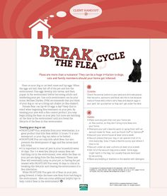 Break the Flea Cycle...what to do when fleas invade your home.