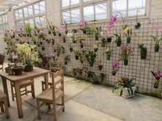 How To Create A Natural Orchid - Home Cleaning Orchid House, Growing Orchids, Growing Plants, Front Yard Design, California Garden, Orchids Garden, Orchidaceae, Garden Styles, Garden Inspiration