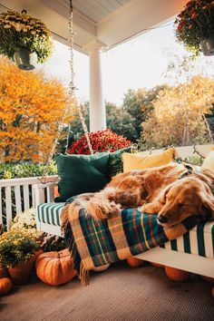 Puppy on a porch swing. Puppy on a porch swing. Herbst Bucket List, Autumn Aesthetic, Autumn Cozy, Fall Home Decor, Happy Fall, My New Room, Fall Halloween, Cute Dogs, Sweet Home