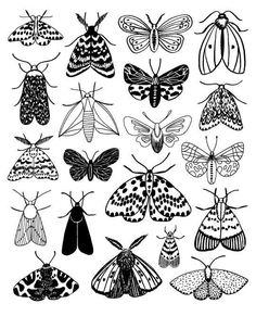 Moths, limited edition giclee print - Moth is a print taken straight from the pages of my book, Twenty Ways to Draw A Tree. This print is - Arte Sketchbook, Doodle Art, Bird Doodle, Art Inspo, Line Art, Giclee Print, Linocut Prints, Etsy, Art Drawings