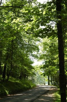 Cades Cove is a beautiful place to explore and see nature in the Smoky Mountains.