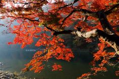 Riverside leaves. Photo by M. Kano � National Geographic Your Shot Down The River, National Geographic Photos, Kyoto, Amazing Photography, Boat, Community, Leaves, Water, Painting