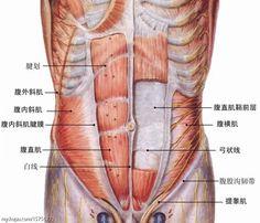 《超級減肥王》劉畊宏教練,最强悍的9種腹肌撕裂動作,練出人魚線與馬甲線 | manfashion這樣變型男-最平易近人的男性時尚網站