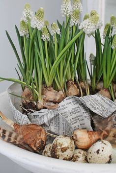 Flower Bulbs By Vibeke