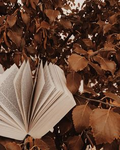 I love the brown, rustic feeling leaves in the background of the book.