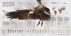 (inconsolata) (La National Geographic, la revista mejor diseñada...)