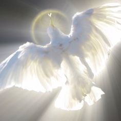 The soaring dove spoke of tranquillity and peace from within.... Love you Robbie  10-4 / 9-18-13