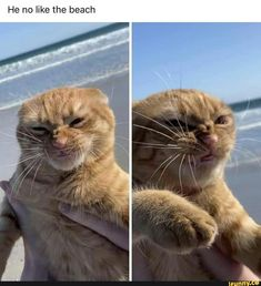 Cute Little Animals, Cute Funny Animals, Funny Cute, Cute Cats, Funny Animal Memes, Funny Animal Pictures, Cat Memes, Cat Couple, Crazy Cats