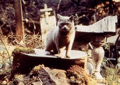 The Anniversary edition of the Stephen King adaptation PET SEMATARY has been released on Blu-ray and Ultra HD. Alien 1979, Pet Sematary, Halloween Cat, Halloween Costumes, Steven King, National Cat Day, Cinema, Danse Macabre, All About Cats