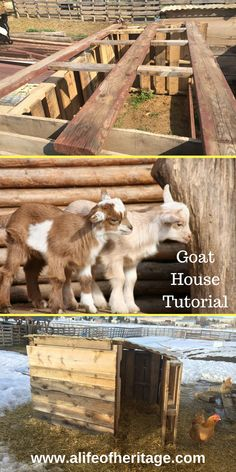 Goat houses and goat shelters great for all weather!