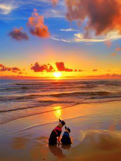 Pet-friendly, off-leash beach vacation to Cape San Blas, FL.