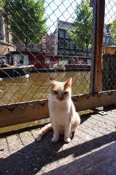 Meet the cats from De Poezenboot, a floating cat sanctuary located on a boat in the canal belt of Amsterdam. See all the pictures here: http://travelling-cats.blogspot.be/2014/09/cats-from-amsterdam-netherlands.html