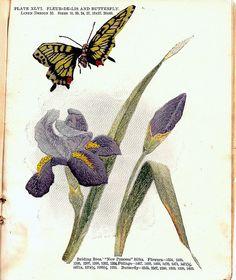 Belding Brothers XLVI 1900's | Embroiderist | Flickr
