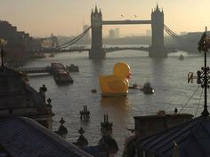 There is a giant rubber duck floating in the Thames. Somewhere, a Herondale is screaming in terror.