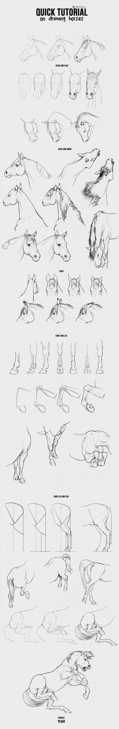 anatomi-model-karakalem-çizimleri-asd555