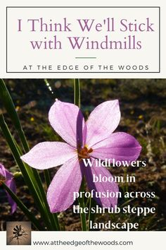 Wildflowers bloom in profusion across the shrub steppe landscape Permaculture, Windmill, Wildflowers, Shrubs, Bloom, Wellness, Make It Yourself, How To Plan, Landscape