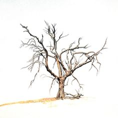 Landing Zone 2 by Paul Murray - Drawing All Drawing ( pencil, nature, tree, polychrome, realism, drawing )