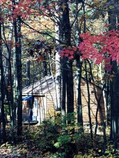 Love Bug Cabins--Hocking Hills! $79-$99 per night weekday. $139-$159 Weekend. Includes Indoor Jacuzzi!