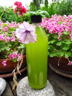 Mint basil juice- diy without cooking- perfect for hot days! Hot Days, Basil, Juice, Mint, Diy Crafts, Texture, Cooking, Creative, Blog