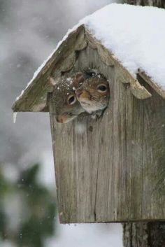 Baby it's cold outside - two squirrels take shelter in a bird house
