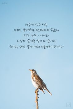 I can fly Quotes Gif, Wise Quotes, Famous Quotes, Words Quotes, Inspirational Quotes, Sayings, The Words, Great Words, Korean Text