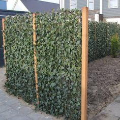Prefabricated Hedge Hedera fence Hedera Helix Woerner atmosphere Source by Hedera Helix, Back Gardens, Outdoor Gardens, Cerca Natural, Green Fence, Fence Landscaping, Garden Fountains, Garden Trellis, Plant Wall