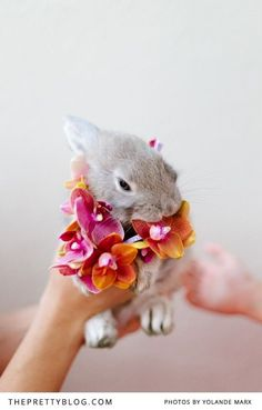 Little bunny with orchids | Photographers: Yolandé Marx, Flowers & Styling: Heike from Fleur Le Cordeur