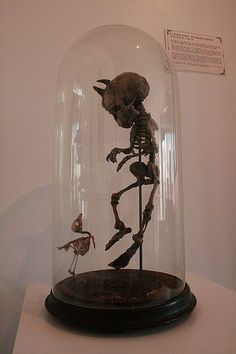 ''L'enfant Diabolique'' or ''The Devil Child'' was said to be still born. his Mother died of massive hemorrhages, she was 52, the skeletal remains of the stillborn were encased in Glass along with the sparrow that flew into the room at the time in order to contain any Bad Luck from entering further into an already contaminated environment.