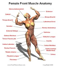 FREE BodyBuilding Manual and Muscle Anatomy Book