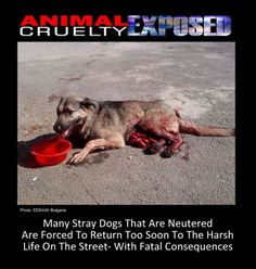 Shame on HUMAN MONSTERS. Shame on HUMANITY. Poor Animals need HELP.