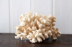 Hey, I found this really awesome Etsy listing at https://www.etsy.com/listing/171250724/natural-sea-coral-in-cream-sea-coral