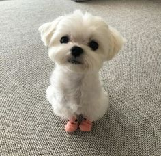 Cute Little Animals, Cute Funny Animals, Cute Cats, Funny Cats, Very Cute Puppies, Cute Baby Dogs, Cute Animal Pictures, Cute Creatures, Dog Love