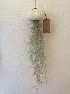 Spanish Moss, Hanging Pots, Water Plants, Container Plants, Pretty Little, Home Deco, Sea Glass, Terrarium, Orchids